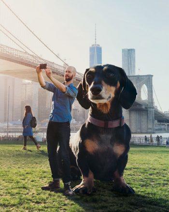 Mitch och taxen Vivian flyttar till Brooklyn i New York.