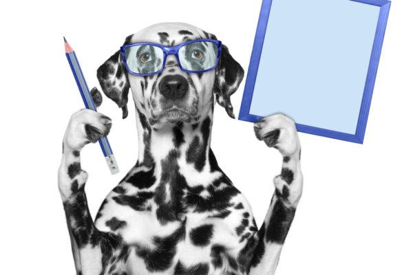 10 kul hjärnaktiviteter som berikar din hunds liv