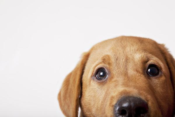 """""""Det är bara en hund …"""""""