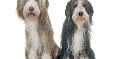 Funderar du på att skaffa en hund till?