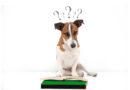 7 tecken på att hunden behöver mer stimulans
