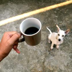 kaffe i kopp och hund nedanför