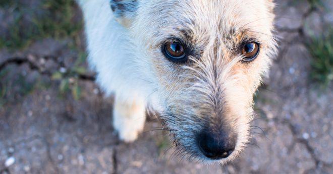Lite ledsen hund tittar upp