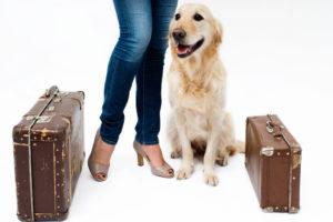 Oroar du dig för hunden när du är på semester?