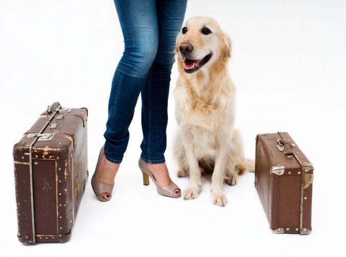 matte och hund med resväskor