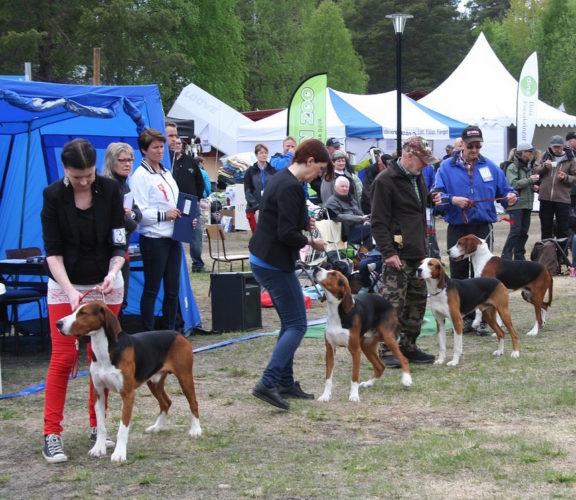 hundar på rad med förare på en utställning eller tävling