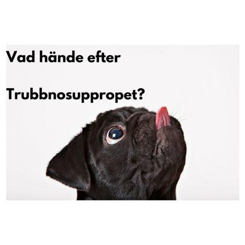 svart ,ops slickar sig om nosen, text: Vad hände efter Trubbnosuppropet?