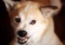 Gör din egen hundtandkräm