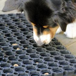 Chakina fiskar upp torrfoder ur en matta med hål i.