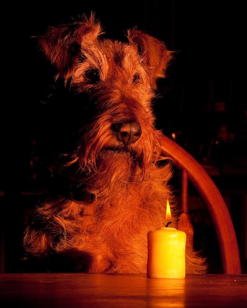 irländsk terrier tittar på vackert levande ljus