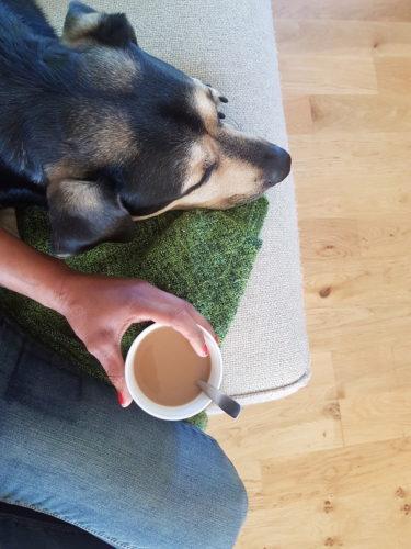 Medarbetarsamtal med hund