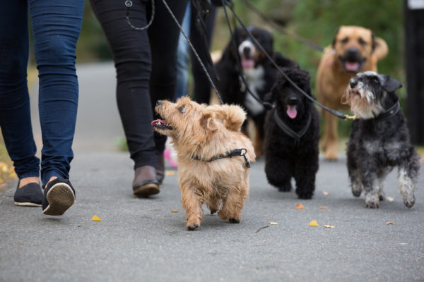 Hundpromenad mot djurförsök