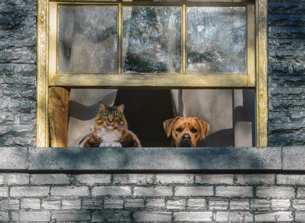 Katt och hund i fönstret till hus som man kan låna mot att man passar husdjuren