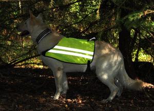 Hund i gul reflexväst