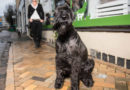 Nominera Årets bragdhund