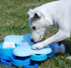 Söt vit hund leker med Nina Ottosson-spelet Tornado