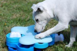 Vinn smarta hundspel från Nina Ottosson!