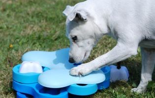 Vinn smarta hundspel från Nina Ottosson … Igen!