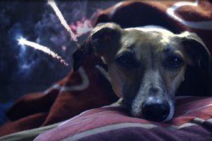 Tävla om skottfritt nyår på hotell med din hund