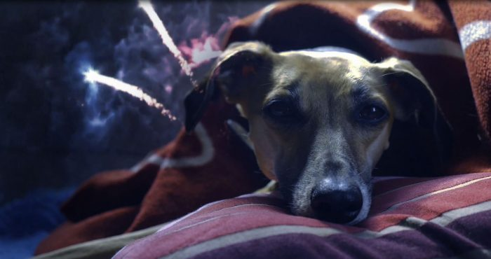 hund som ligger på kudde medan nyårsraketer smäller av i bakgrunden