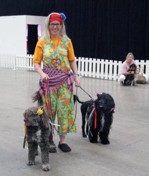 Färgglatt ekipage på väg till rasparaden för att representera portugisisk vattenhund.