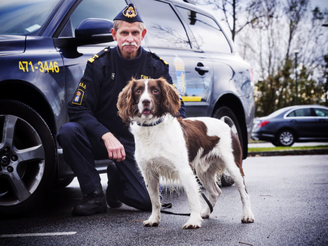 Årets Narkotikasökhund 2016, springer spanieln Billy, med sin förare Anders Mårtensson.