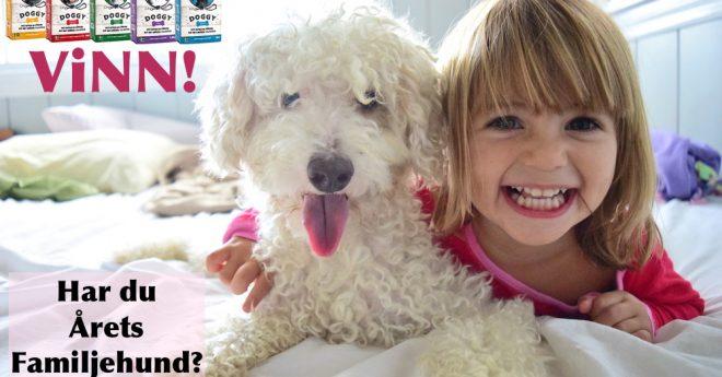 Glad flicka och rufsig hund i sängen.