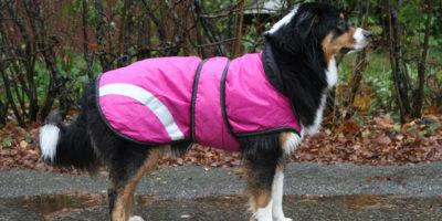 Trafikdöden slår mot hundratals hundar