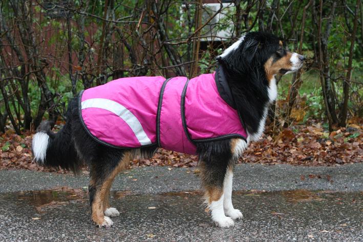 Rosa till tiken och blått till hanhunden - eller?