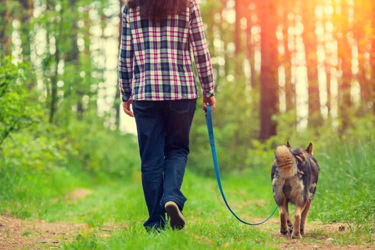 Förbered dig och hunden inför en krissituation