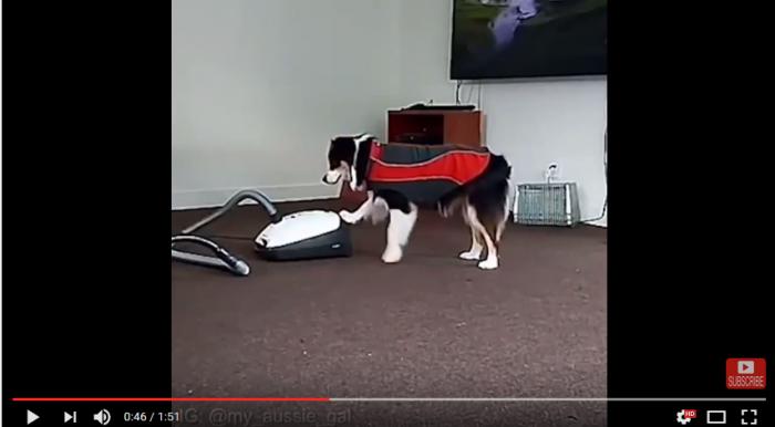 Den fantastiska hunden Secret