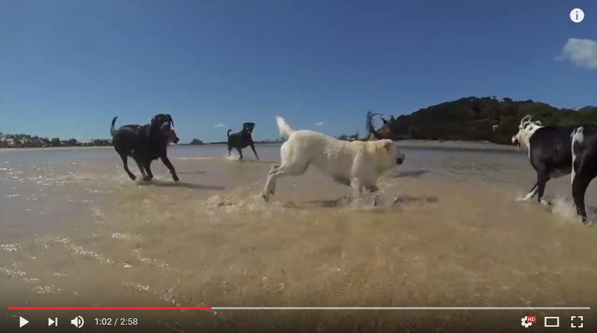 Strandhäng med hundgänget (och en katt!)