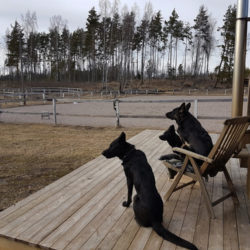 Hundar lär oss att vara här och nu