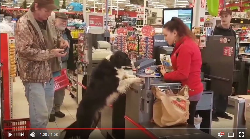 Shoppinghunden som reder sig själv