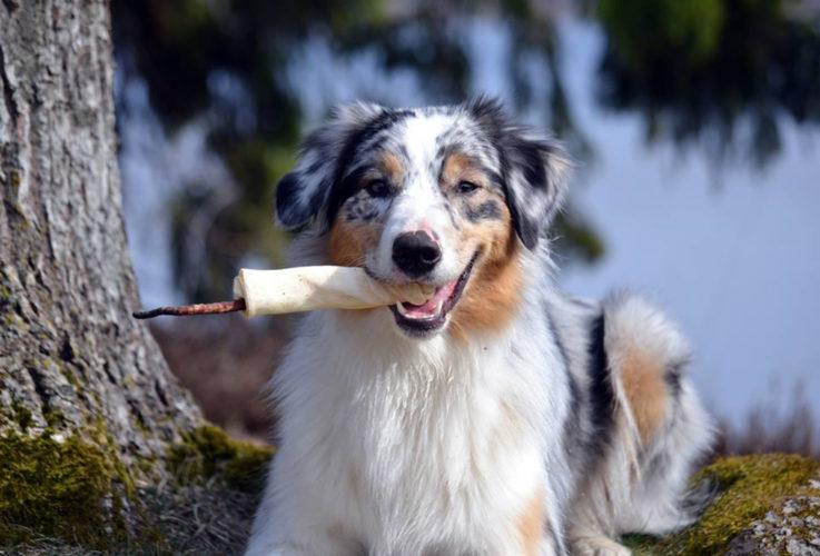 Skicka hundogram till din favoritvovve