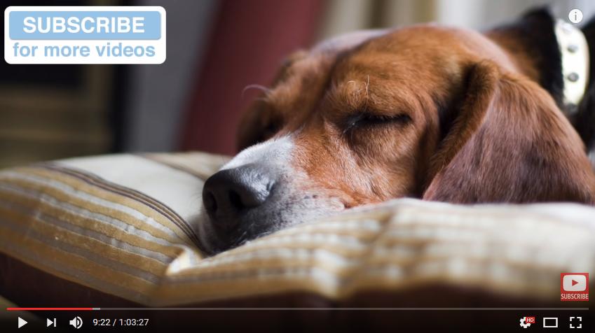 Lugnande musik för hunden
