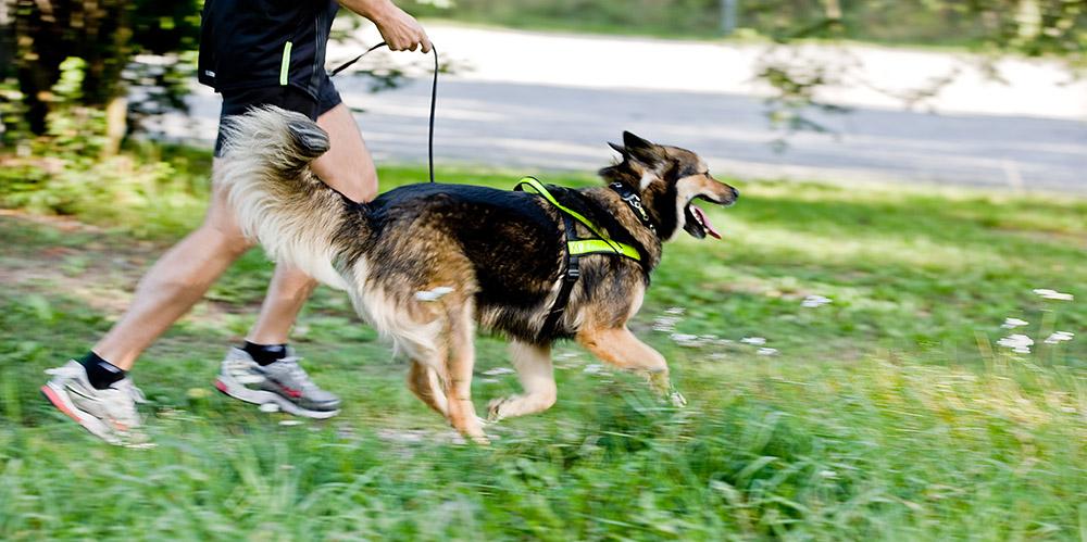 Hundlöpet Härliga Hund Springa med hund