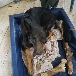 Flexie gillar att gräva och samla ihop sina saker.