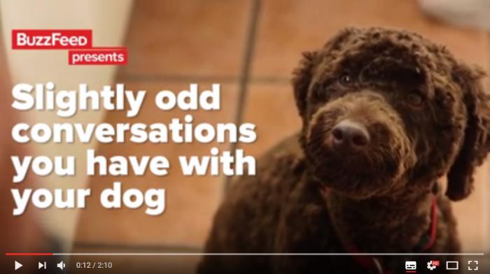 Samtal som bara hundägare förstår