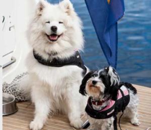 Att långsamt utforska Göta kanal passade de här två kompisarna utmärkt.