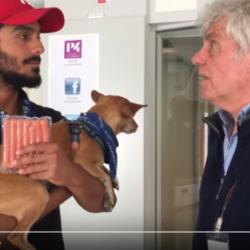 Kan en hund bli vegan?