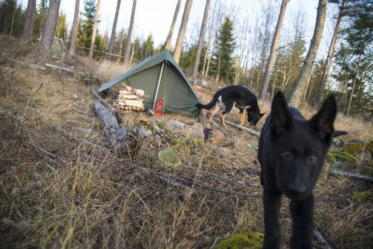 Campinghelg med vovven