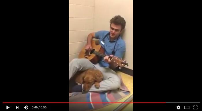 Veterinär sjunger för sina patienter
