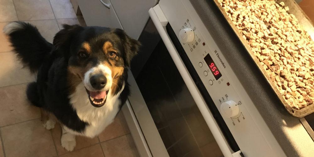 Gör eget helggodis till hunden