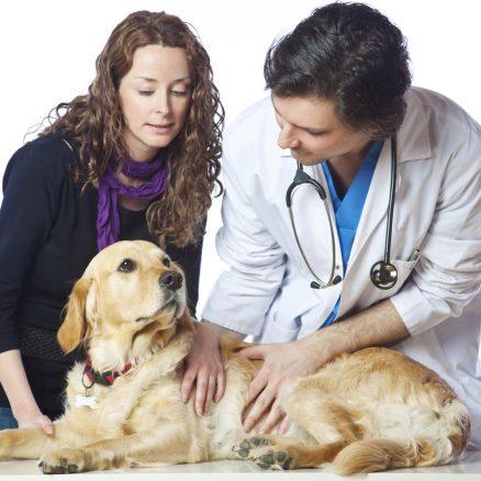 veterinär härliga hund
