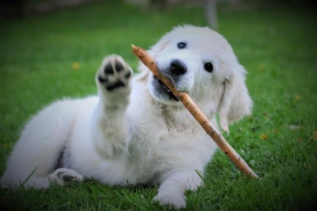 Underbara hundar!