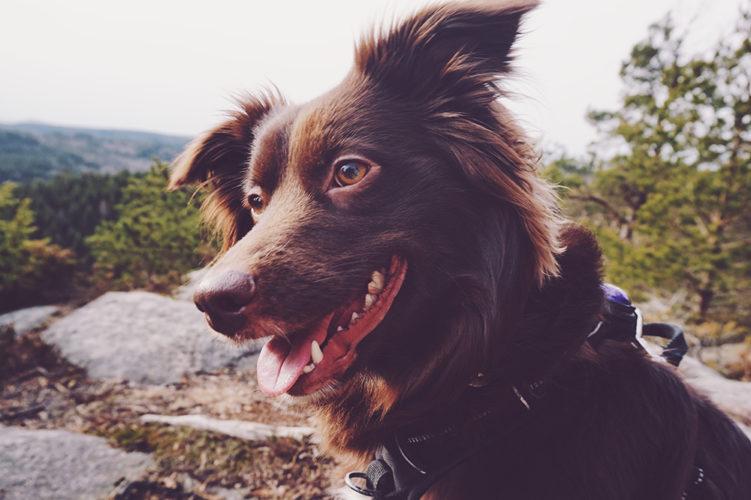 Instagram-intervjun: Amanda Käck med hundarna Halo och Leia