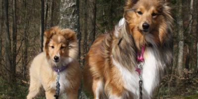 Vi efterlyser fina hundbilder