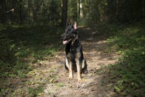 Flexie är en van resenär och har tillbringat mycket tid i Baltikum genom åren. Så här bra hade hon det i en härlig skog i utkanten av Vilnius.