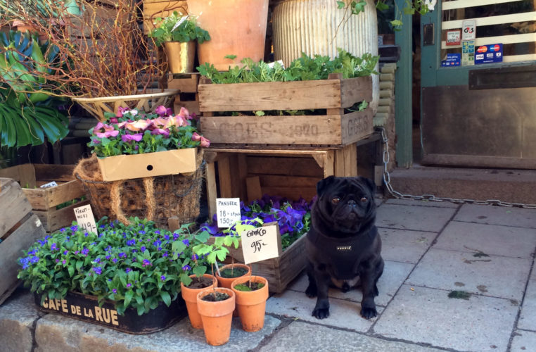 Plants and pugs